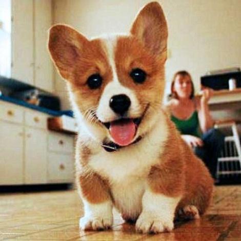 cute puppy pic~!