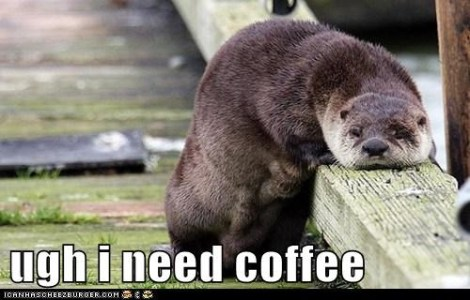 otter and coffee