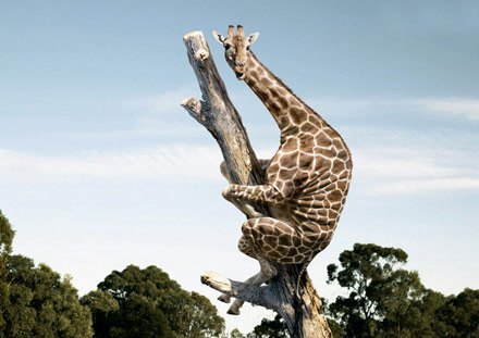 57392_scaredgiraffe_large