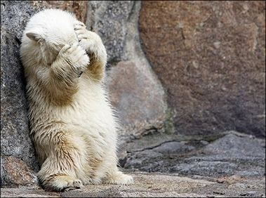 bear071409_large