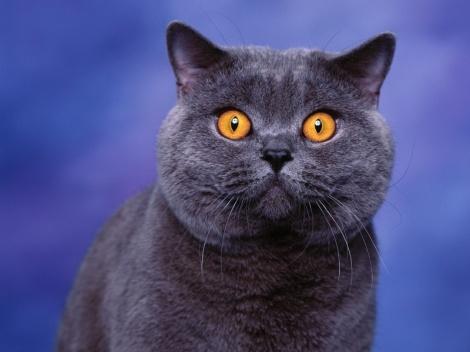 staring_cat-800x600