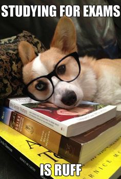 studying is ruff